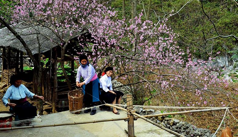 Hà Giang rực rỡ với sắc màu hoa mận, hoa cải vàng, hoa đào.