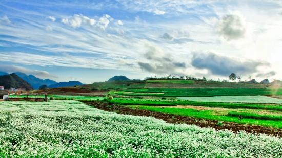 Cao nguyên Mộc Châu xanh mướt.