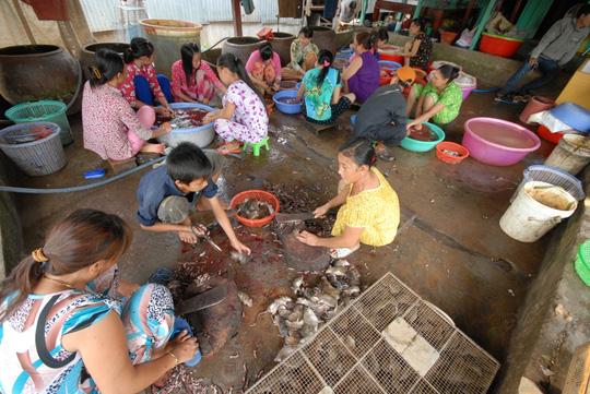 Phụ nữ và trẻ em làm thịt chuột để cung cấp cho các nhà hàng, khách sạn