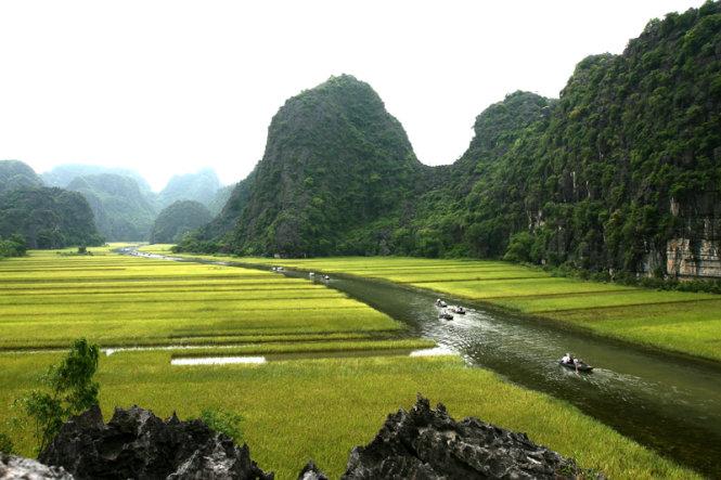 Mùa lúa chín vàng trên sông Ngô Đồng