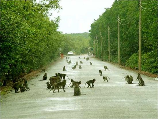 Đảo khỉ Cát Bà