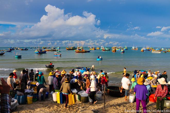 Đến đây bạn cũng đừng bỏ lỡ dịp hòa mình vào phiên chợ cá sôi động đầy màu sắc với đủ những âm thanh rộn rã của một ngày mới.