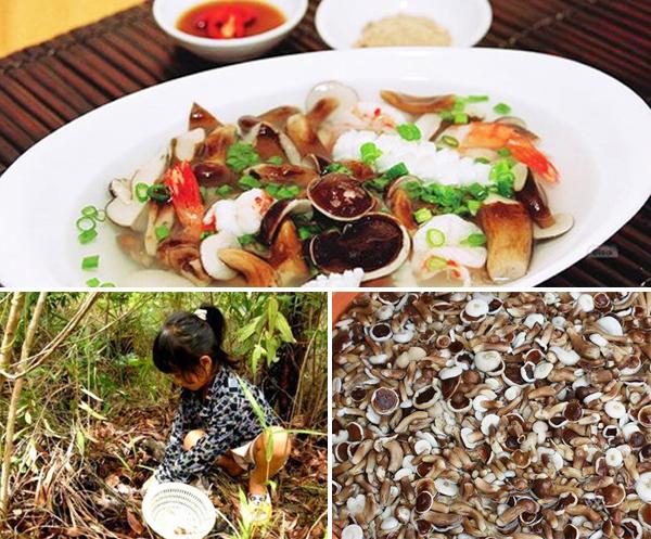 Nấm tràm chỉ có ở Phú Quốc vào mùa mưa (tháng 4 đến tháng 9)