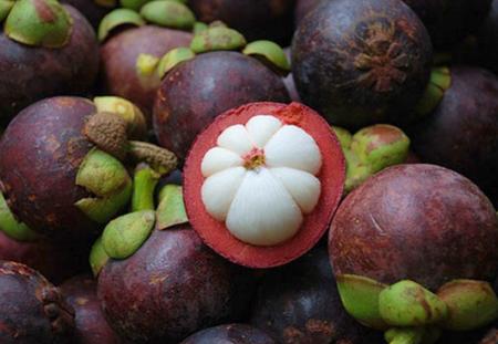 Măng cụt là 1 trong 10 trái cây thượng hạng, được phong là Nữ hoàng trái cây