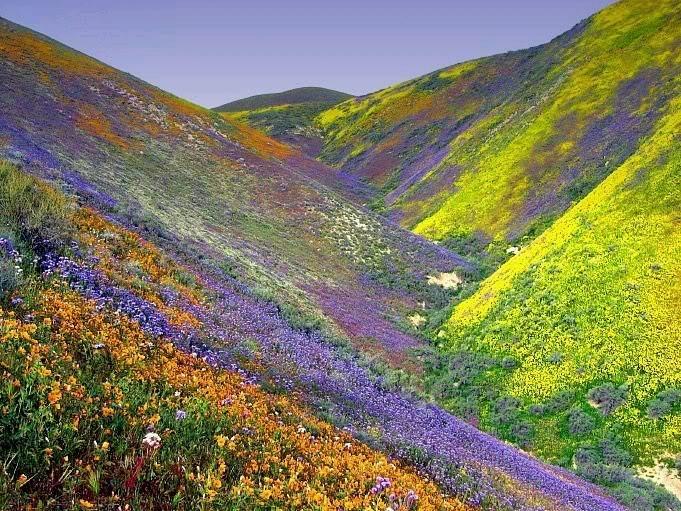 Những mùa hoa Đà Lạt