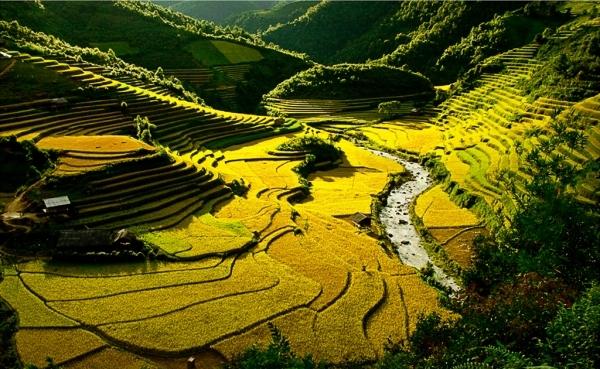 Thung lũng Mường Tè vào mùa lúa chín
