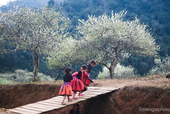 Những khu rừng mận, rừng đào - Điểm du lịch Mộc Châu hấp dẫn.