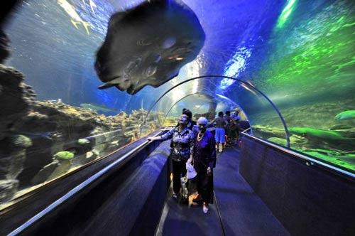 Hình ảnh Những điểm du lịch hút khách mùa đông ở VN số 2