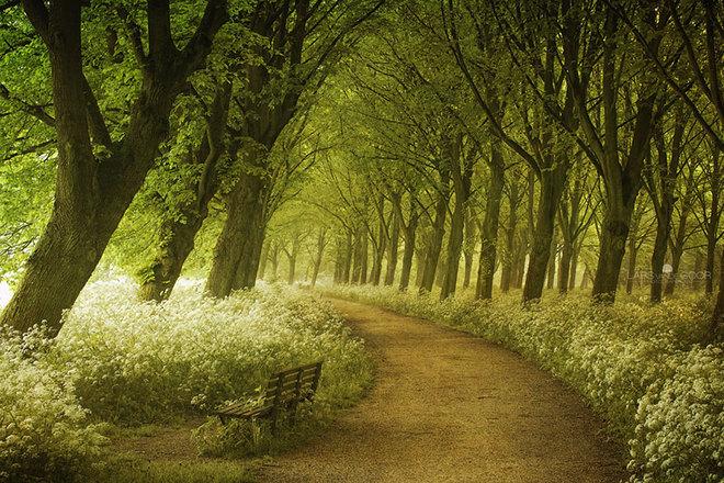 Con đường mùa xuân ở Hà Lan.