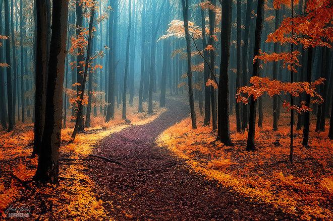 Mùa thu vàng trên con đường đi bộ trong khu rừng thuộc dãy núi Karpat, chạy qua Trung và Đông Âu.