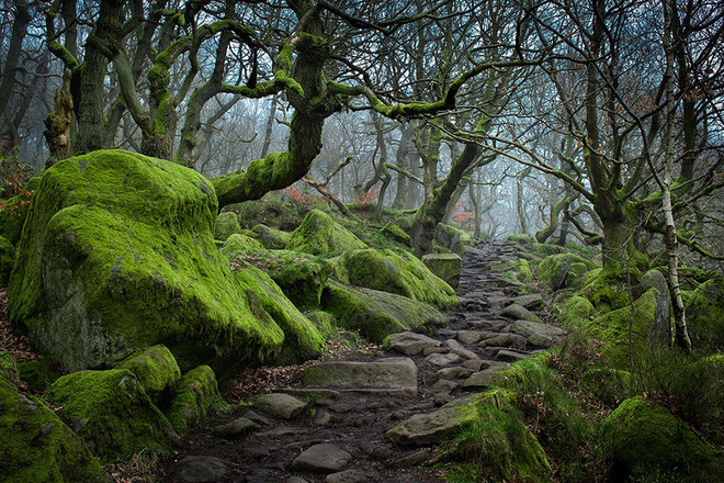Những bậc thềm rêu phong trên con đường mòn ở thung lũng Padley Gorge, thuộc vườn quốc gia Peak District, Anh.