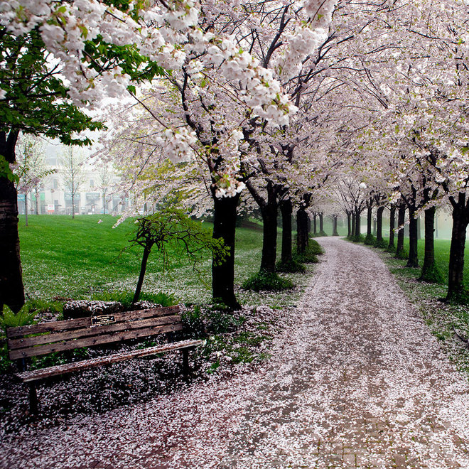 Không gian tràn ngập sắc xuân trong công viên Spencer Smith, Burlington, Ontario, Canada.