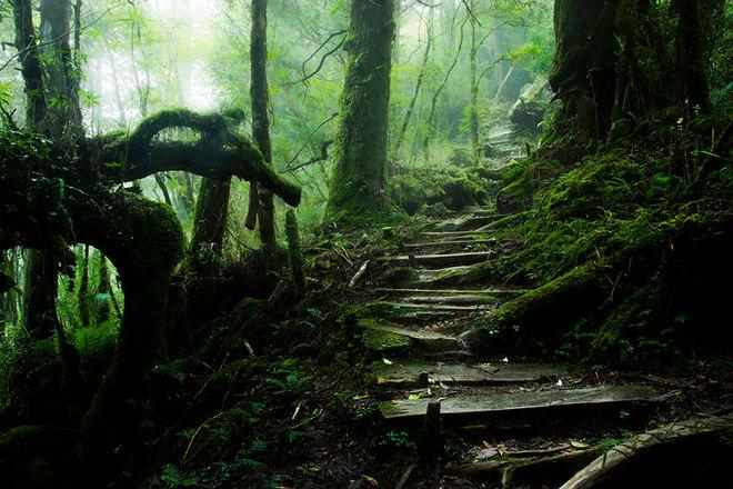 Lối mòn lên núi Taiping, Đài Loan.