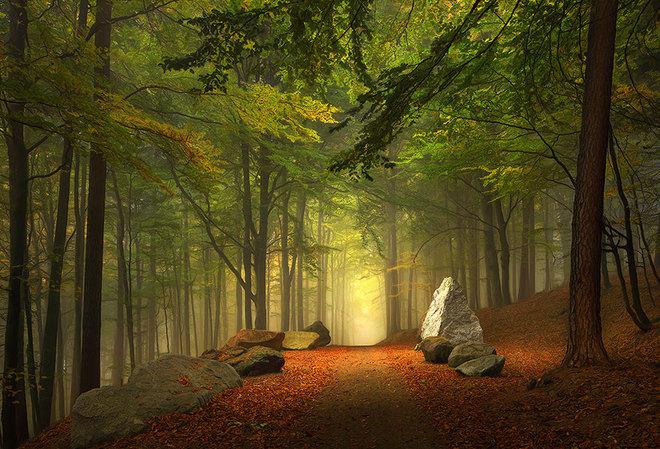 Vẻ đẹp huyền ảo trên con đường mòn đi bộ trong rừng Bavaria, Đức