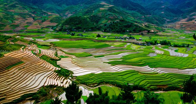 Thung lũng Cao Phạ thuộc huyện Mù Căng Chải, Yên Bái vào mùa đổ nước với những thửa ruộng còn mênh mang nước đan xen những thửa ruộng lúa đã lên cao.
