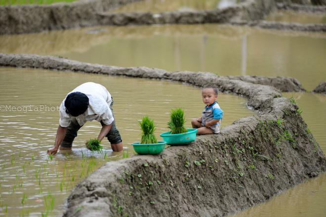 Đôi khi bắt gặp những hình ảnh những cậu bé con ngồi ngoan bên bờ ruộng để bố mẹ làm việc.