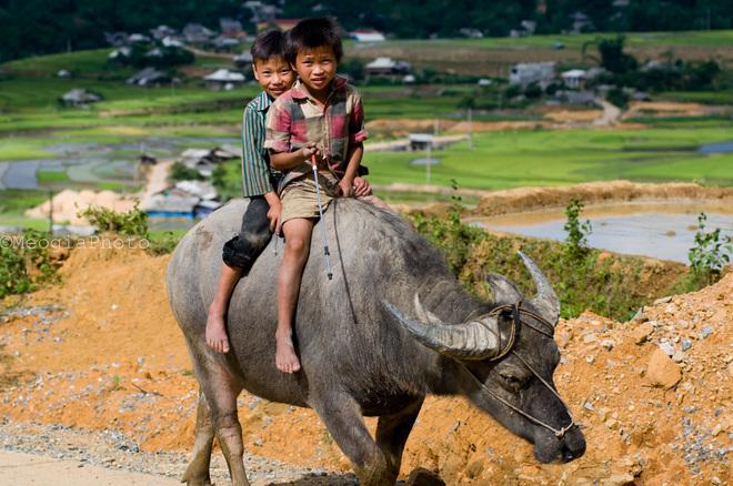 Những đứa trẻ chăn trâu với nụ cười hồn nhiên như cây cỏ.