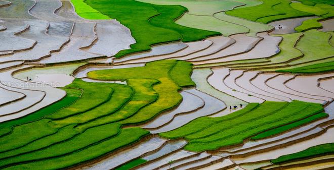 Cả cánh đồng với những ô màu như một bức họa thiên nhiên tuyệt đẹp. Đây cũng là nơi mang lại ấm no cho cuộc sống của bà con người Mông, người Thái ở thung lũng Cao Phạ.