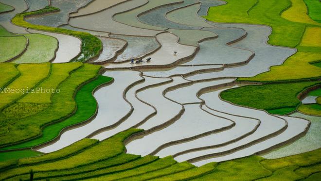 Người nông dân cần mẫn cày bừa giữa những đường cong mềm mại của cánh đồng mùa đổ nước.