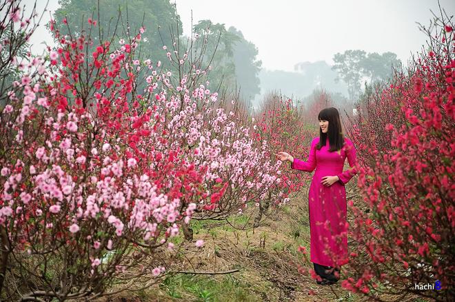 Vẻ đẹp Hoa đ 224 O C 225 C V 249 Ng Miền Việt Nam Dulich24