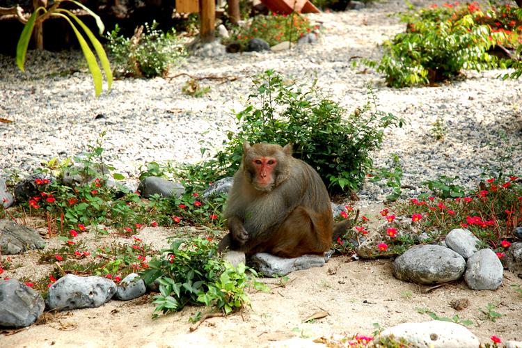 1 chú khỉ trên đảo