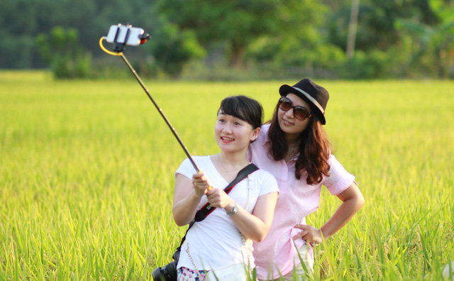 Du khách thích thú chụp ảnh những cánh đồng lúa chín vàng.