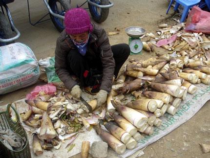 Đặc sản Bắc Kan - Măng Vầu