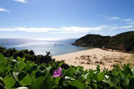 Hoa muống biển chạy dài xuống bãi biển