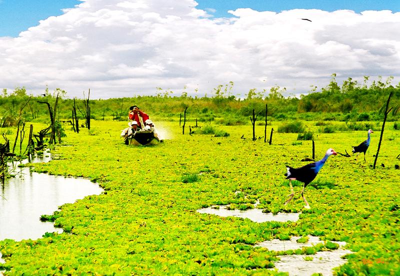 Khám phá vẻ đẹp Rừng Tràm U Minh Hạ là trải nghiệm tuyệt vời.