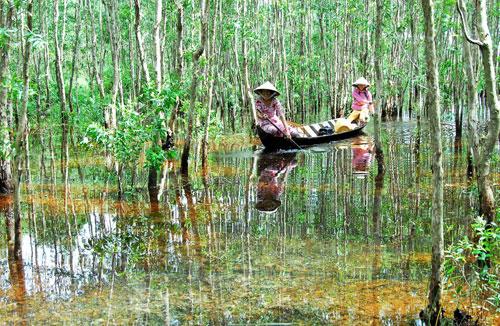 Lịch trình tham khảo Khám phá Cà Mau 1 ngày: 11h – 15h, Đến rừng U Minh Hạ, ăn trưa và nghỉ ngơi.