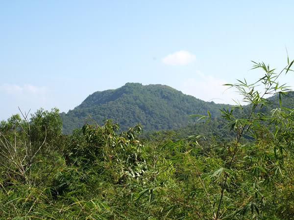 Núi cao với hàng cây xanh tươi mát
