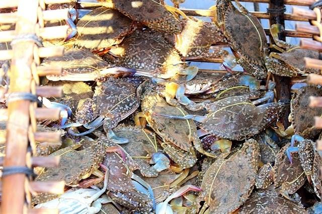 Hải sản tươi ngon ở đảo Thạch An.