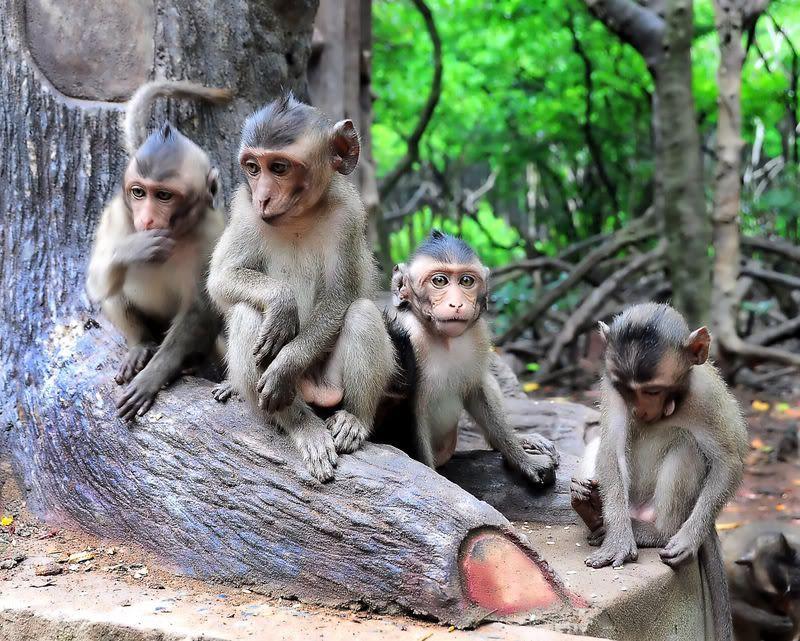 Đảo Khỉ, điểm du lịch hấp dẫn ở Cần Giờ.