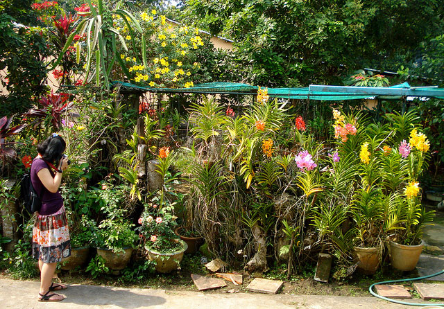 Vườn Lan Trong khuôn viên nhà cổ.