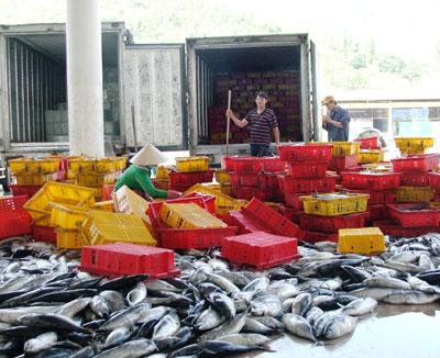 Phân loại cá đem lên xe đi tiêu thụ