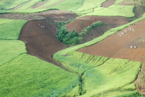 Nương lúa xung quanh cánh đồng Mường Thanh