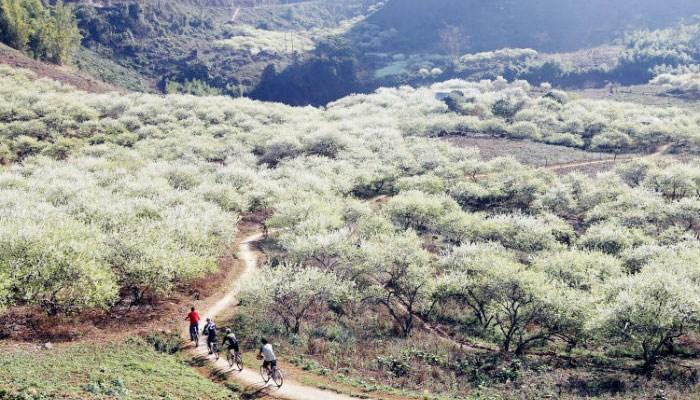 Thung Lũng Mận Nà Ka dịp đầu năm mới.