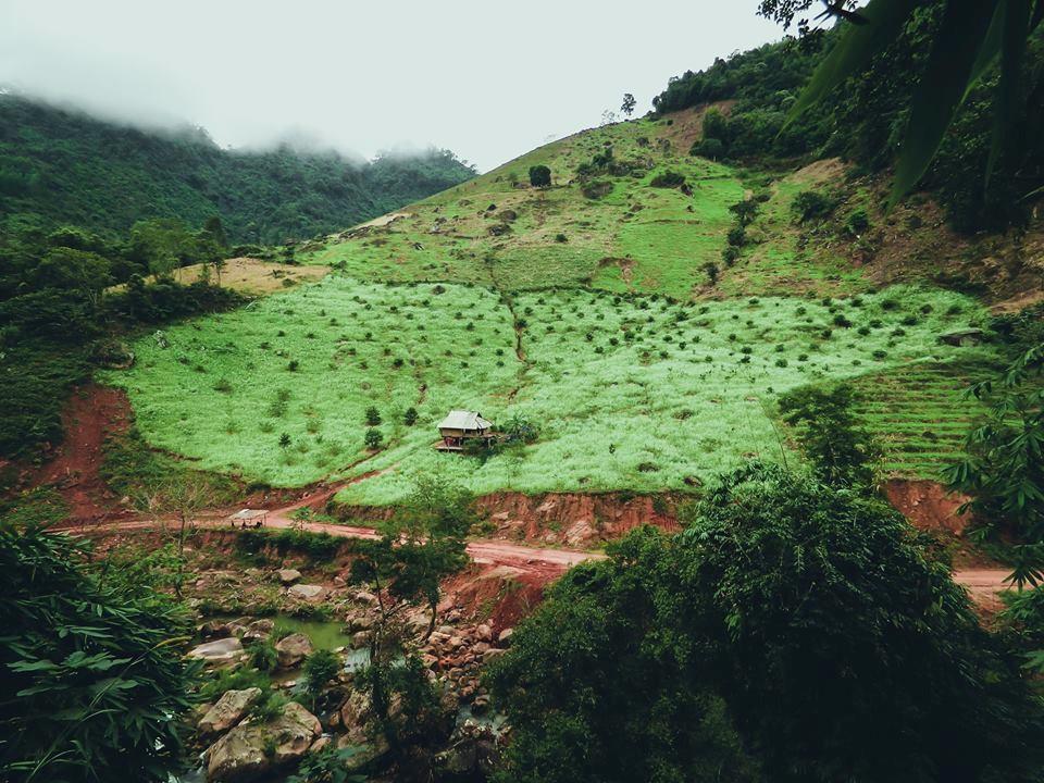 Hoa cải trắng ở bản Pa Pách.