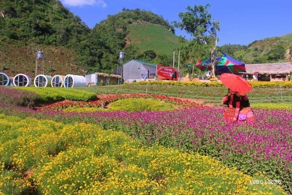 Rất nhiều hoa được trồng trong khu du lịch.