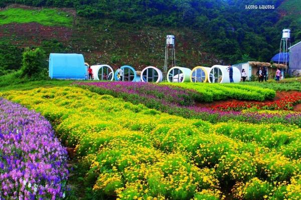Happly Land Mộc Châu - Điểm du lịch hấp dẫn Mộc Châu (Ảnh Psy travel).