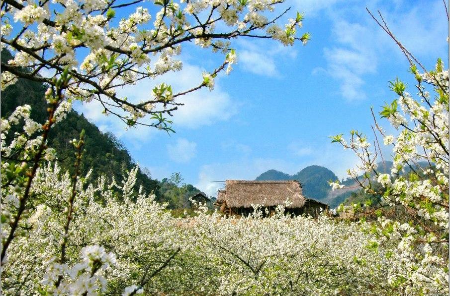 Tháng 1, tháng 2 dương lịch, Mùa hoa đào, hoa mận nở rộ.
