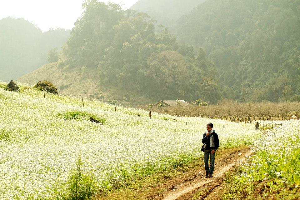 Hoa cải phủ trắng núi đồi bản Pa Phách.