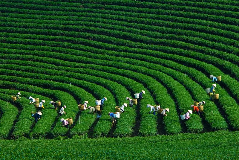 Mộc Châu được ví như Đà Lạt ở Tây Bắc, mát mẻ quanh năm.