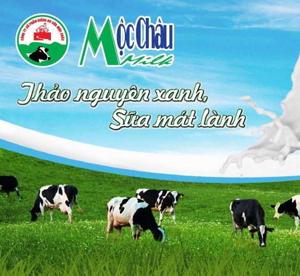 Sữa bò - đặc sản Mộc Châu.