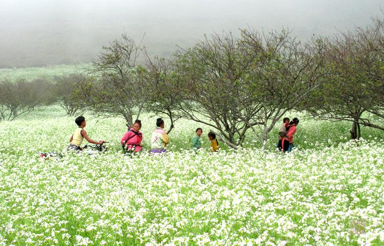 Tháng 10 đến tháng 2 dương lịch là mùa hoa cải, thời gian tốt nhất để đi phượt Mộc Châu.