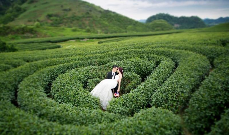 Đồi chè trái tim - điểm chụp hình đẹp tại Mộc Châu.