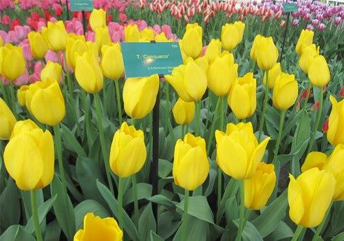 Vườn hoa nhiệt đới Mộc Châu - Điểm du lịch Mộc Châu hấp dẫn.