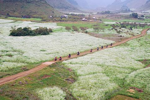 Mùa thu - mùa của những cánh đông cải trắng Mộc Châu