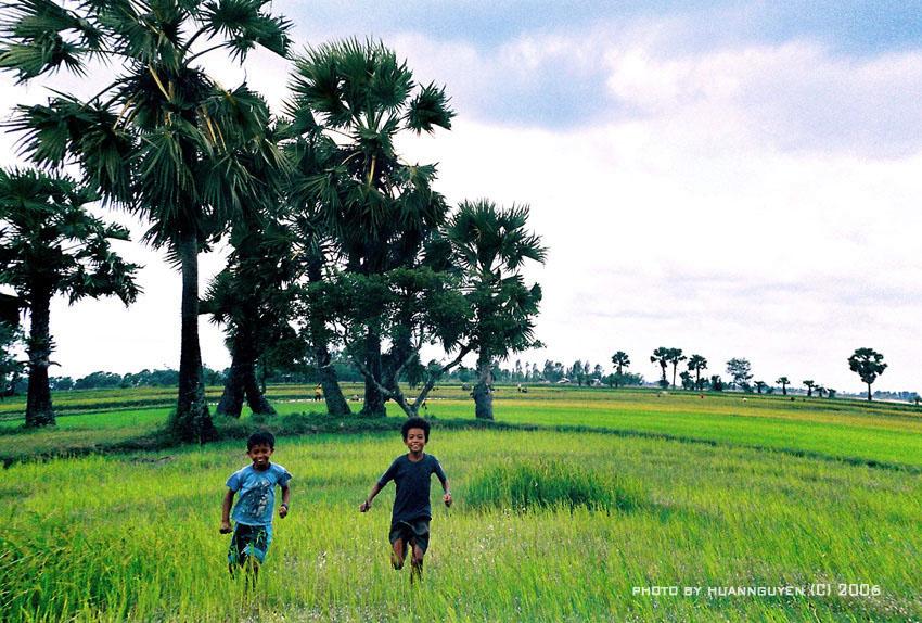 Cây thốt nốt là một đặc sản của du lịch An Giang nói chung và Châu Đốc nói riêng.
