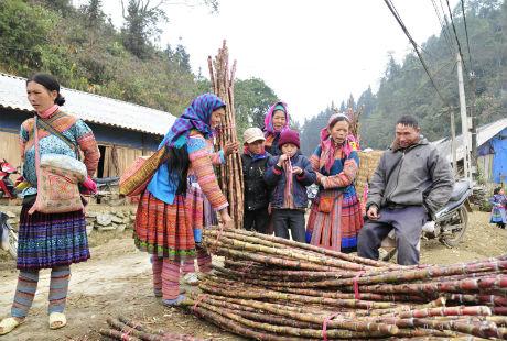 Cuối năm và Giáp Tết âm lịch cũng là thời điểm người dân thu hoạch loại cây mía nổi tiếng của đất Mường Khương. Vì thế mía được bán khá nhiều và tập trung ở chợ Cao Sơn.